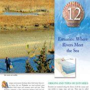 مصب ها: جایی که رودخانهها به دریا میرسند