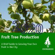 دستور العمل های مربوط به تولید درخت میوه: راهنمای کوتاه و مفصل