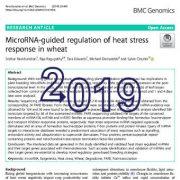 تنظیم پاسخ تنش گرمایی در گندم به واسطهی Micro-RNA