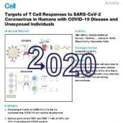 اهداف پاسخهای سلولهای T به کروناویروس SARS-COV-2 در افراد