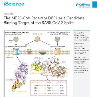گیرنده MERS-CoV DPP4 به عنوان یک هدف اتصال کاندیدای اسپایک SARS-CoV-2