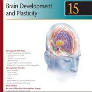 رشد مغز و پلاستیسیته