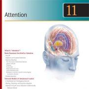 توجه چیست؟ ساختار های مغز دخیل در توجه